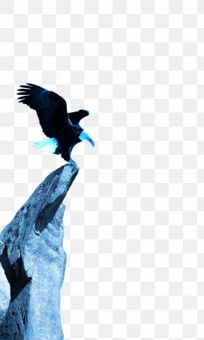 Eagle - Hawk U817eu8bafu5927u738bu5361 Eagle PNG