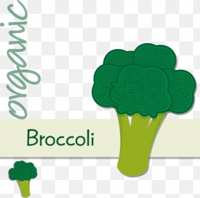 Hand-painted Cartoon Broccoli Label - Graphic Design PNG