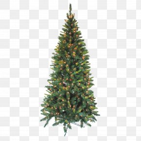 Caillou Transparent Background Ready - National Tree Company Artificial Christmas Tree National Tree 7.5 Foot Kingswood Fir Pencil Tree National Tree Kingswood Fir Pencil Tree PNG