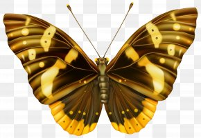 Brown And Yellow Butterfly Clipart Image - Butterfly Brown Clip Art PNG