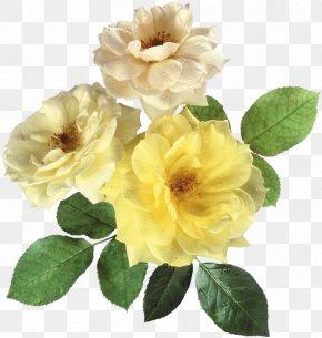 Collins Ornament - Flower Bouquet Rainbow Rose Clip Art PNG