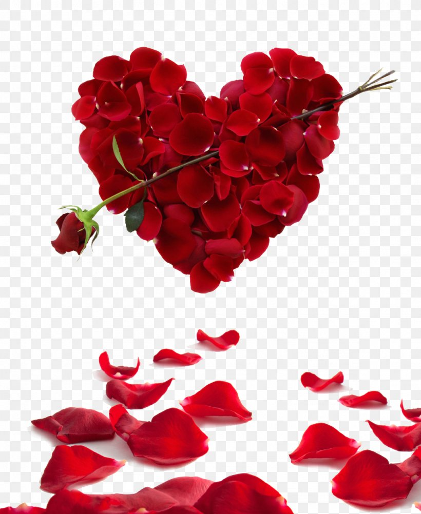 Rose Heart Flower Valentines Day Wallpaper Png
