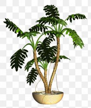 Asian Palmyra Palm Flowerpot Ornamental Plant Houseplant PNG