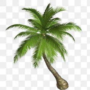 Malina Weissman Beach - Palm Trees Clip Art Transparency Desktop Wallpaper PNG