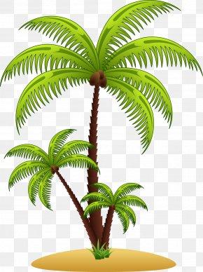 Vector Palm Tree - Arecaceae Euclidean Vector Clip Art PNG
