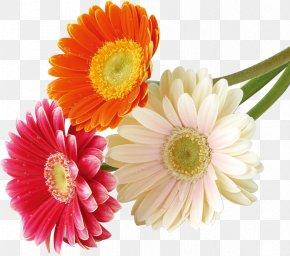 Flower - Flower Bouquet Nosegay PNG
