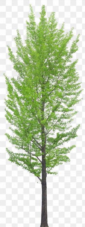 Trees - Tree Clip Art PNG