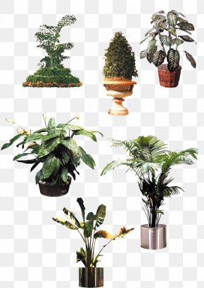 Exotic Vegetation - Houseplant Flowerpot Tree PNG