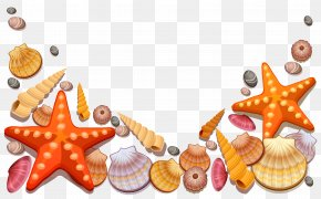 Sea Shells Decor Vector Clipart - Seashell Clip Art PNG