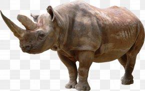 Rhino - Rhinoceros Wallpaper PNG