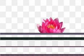 Design - Floral Design Magenta Flowering Plant PNG