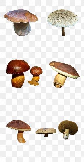 Mushroom - Edible Mushroom Common Mushroom Fungus Shiitake PNG