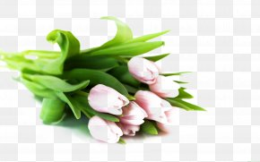Bouquet Of Pink Tulips - Flower Bouquet Tulip White Wallpaper PNG