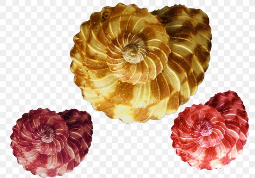 Orthogastropoda Gastropod Shell Mollusc Shell Spiral, PNG, 1000x700px, Orthogastropoda, Cut Flowers, Flower, Gastropod Shell, Gastropods Download Free