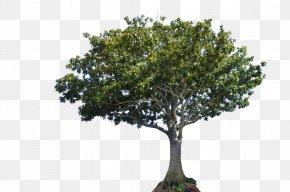Photography - Tree Canopy DeviantArt Bay Laurel PNG