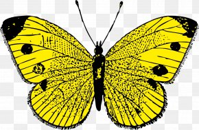 Monarch Butterfly Clipart - Butterfly Clip Art PNG