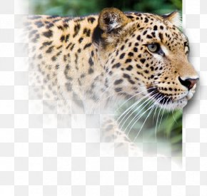 Always Persist Firmly In - Snow Leopard Jaguar Cheetah Horse PNG