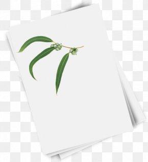 Paper Reel - Paper Green Rectangle Leaf PNG