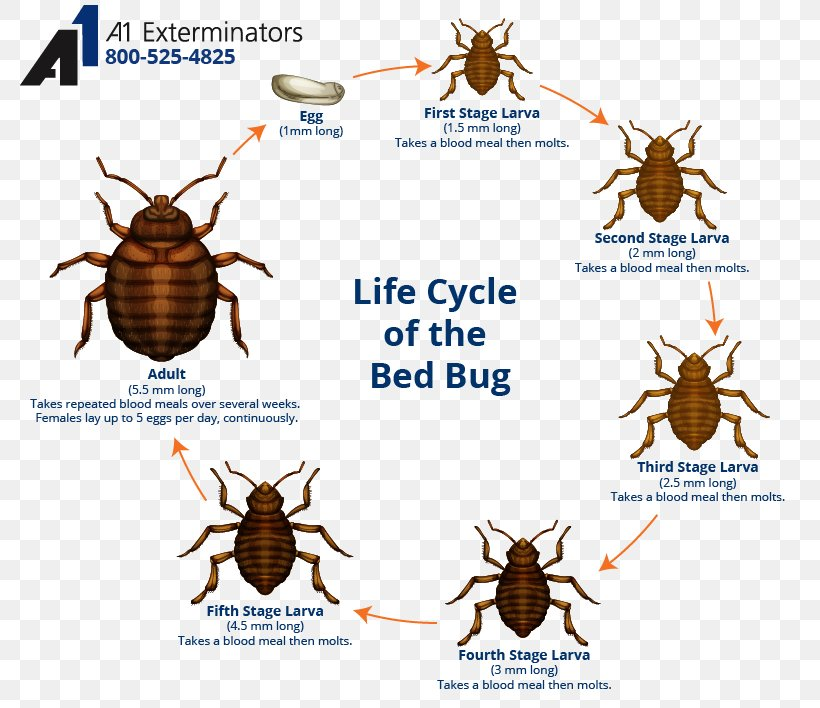 Bed Bug Control Techniques Bed Bug Bite The Bedbug