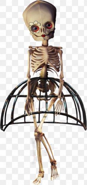 Beauty Skull Skeleton - Human Skeleton Halloween Skull PNG