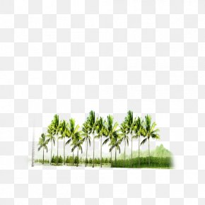 Forest - Forest Tree Download PNG