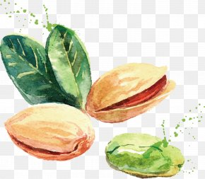 Pistachios Vector - Watercolor Painting Drawing Nut Illustration PNG