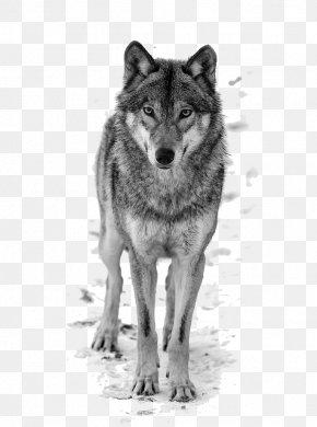 Wolf - Dog T-shirt Top Blouse Shutterstock PNG
