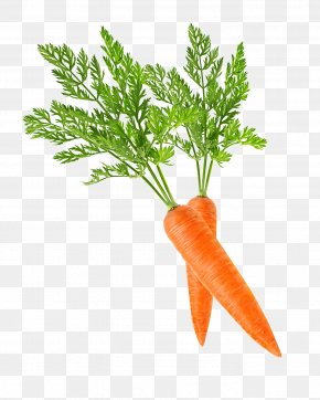 Carrot - Baby Carrot Clip Art PNG