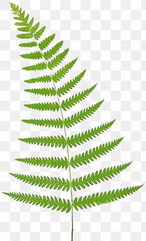 Leaf - Fern Leaf Frond Clip Art PNG