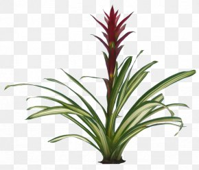 Plants Transparent - Flowering Plant Bromeliads Clip Art PNG