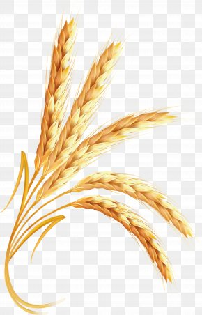Wheat - Emmer Clip Art PNG