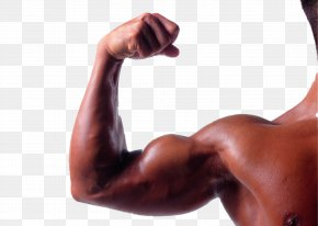 Robust Muscle Arm - Biceps Arm Triceps Brachii Muscle Brachialis Muscle PNG