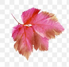 Leaf - Petal Branch Leaf Tree PNG