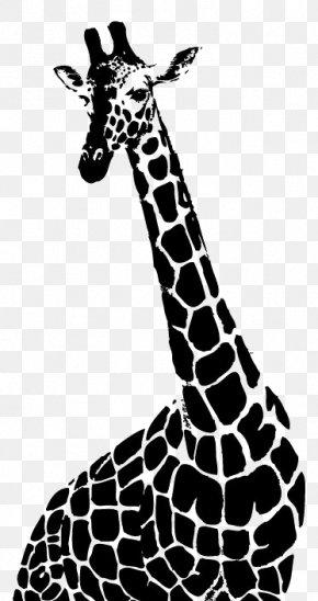 Black And White Giraffe - Drawing Northern Giraffe Monochrome Photography Illustration PNG