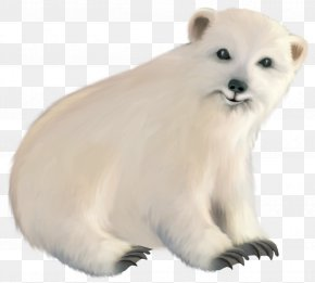 Polar Bear - Baby Polar Bear Polar Regions Of Earth PNG