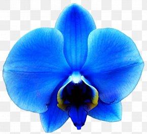 Blue Flower - Orchids Blue Flower Clip Art PNG