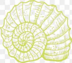 Conch - Sea Snail Coral Illustration PNG