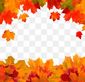 Autumn Leaves - Autumn Leaf Color Red Maple PNG