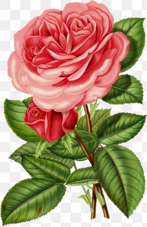 Artwork - Rose Flower Antique Printing Clip Art PNG