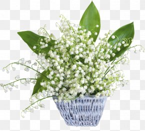 Lily Of The Valley - Lily Of The Valley May 1 Party Labour Day May Day PNG