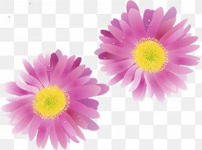 Chrysanthemum - Transvaal Daisy Chrysanthemum Floristry Petal Close-up PNG