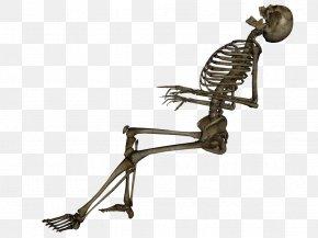 Skeleton Image - Skeleton Clip Art PNG