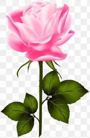 Pink Rose With Stem Clip Art - Garden Roses Centifolia Roses Clip Art PNG