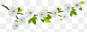 Spring Branch White Clipart - Flower Branch Clip Art PNG