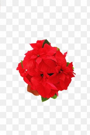 Red Floral - Red Flower PNG