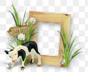 Dog Summer Frame Calming - Cattle Picture Frames Image PNG