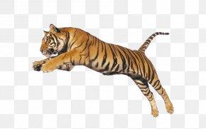 Lion - Lion Cat Leopard Felidae Animal PNG