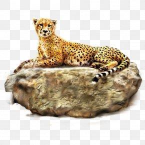 Cheetah - Cheetah Leopard Lion Tiger PNG
