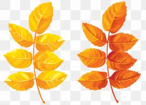 Fall Leaves Clipart Image - Autumn Leaf Color Clip Art PNG