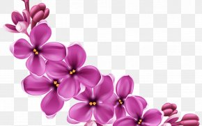 Wildflower Violet Family - Floral Spring Flowers PNG
